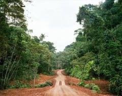 Logging Road With Bridge