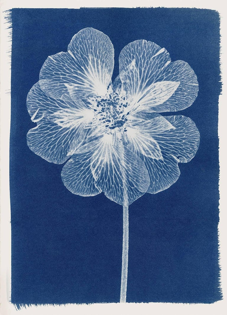 cyanotype paper for sale uk Cyanotype workshop view events by  by placing objects on photosensitised paper that is then  on arrival and email info@suzanneheathcouk to.