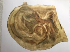 """""""Roadside tree_023"""": 3-D wall sculpture engraved in layers of photography"""