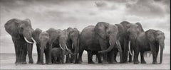 Elephant Group on bare earth, Amboseli, 2008