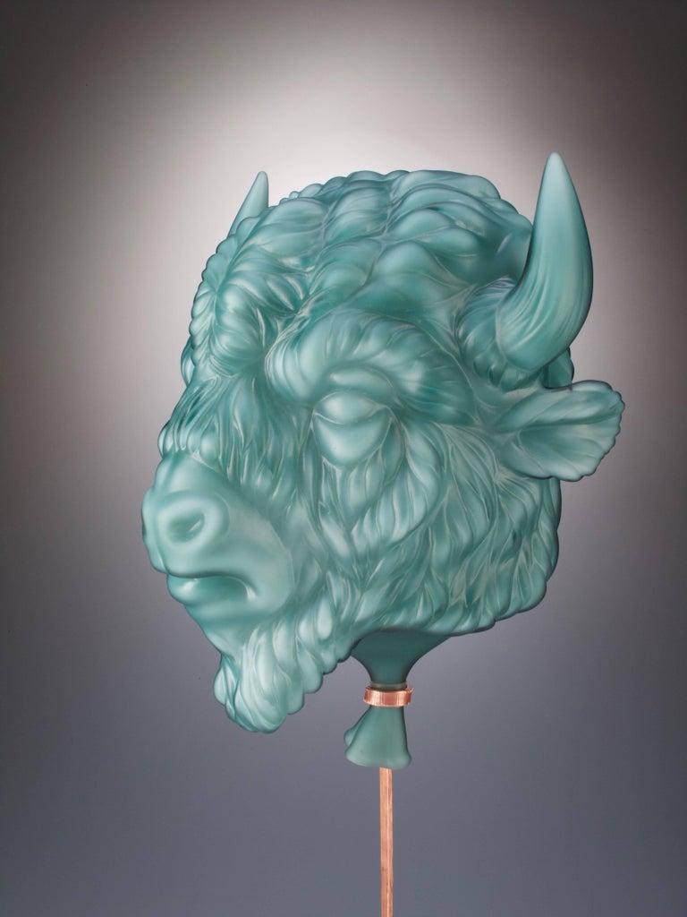 Bison For Sale 5