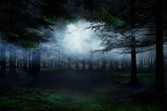 Between the Trees 4 - Conceptual photography, Forest imagery, Mist, Nature