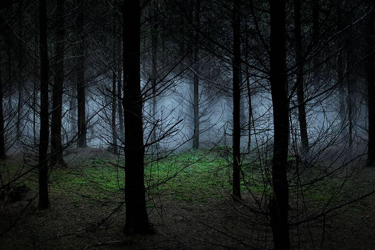 Between the Trees 8 - Ellie Davies, Forests, Dreams, Landscapes, Nature, Plants
