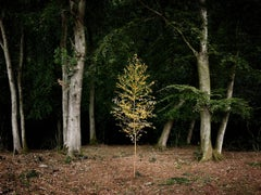 Smoke and Mirrors 1 - Contemporary photography, British forests, Tree imagery