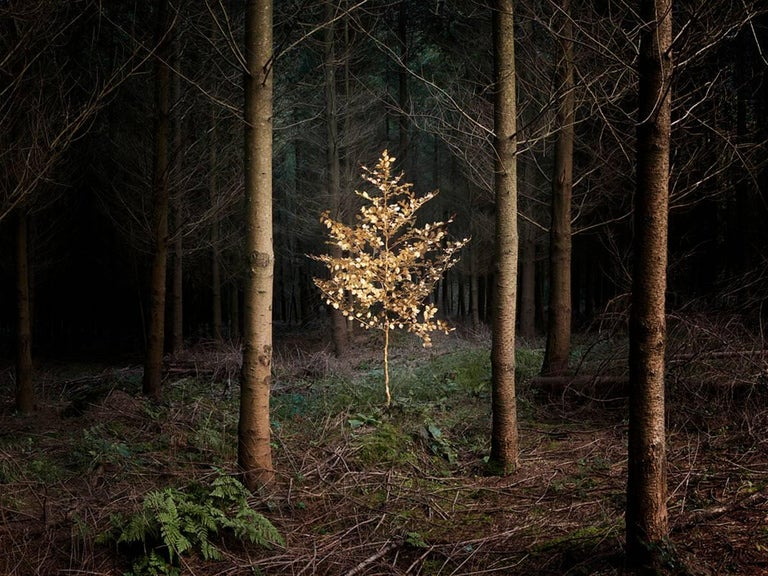 Smoke and Mirrors 5 - Ellie Davies, Fairytales, Childhood, Trees, Plants, Dreams - Photograph by Ellie Davies