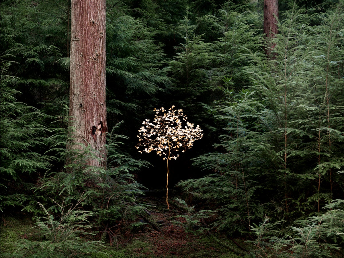 Smoke and Mirrors 6 - Ellie Davies, Unconscious, Fairytales, Childhood, Forest