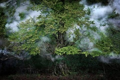Between the Trees 14 - Ellie Davies, Nature, Landscape, Forest, Trees