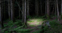 The Gloaming 1 - Contemporary British Photography, Print, Forest