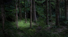 The Gloaming 2 - Ellie Davies, Photographs, Trees, Nature, Landscape imagery
