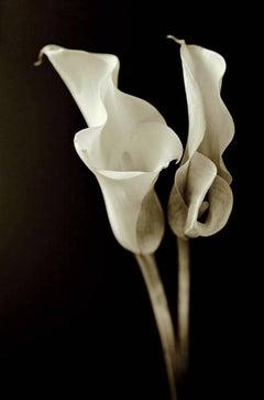 Lillies (Photograph, Print, Flowers, Nature, Floral, Cream, Black)