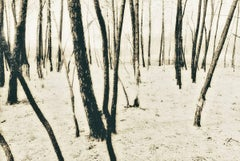 French Trees (Photograph, Print, Trees, Nature, Forest, Grass, Archival)