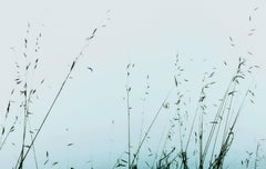 Brittany II (Photograph, Print, Nature, Wildlife, Outdoors, Blue, Grass)