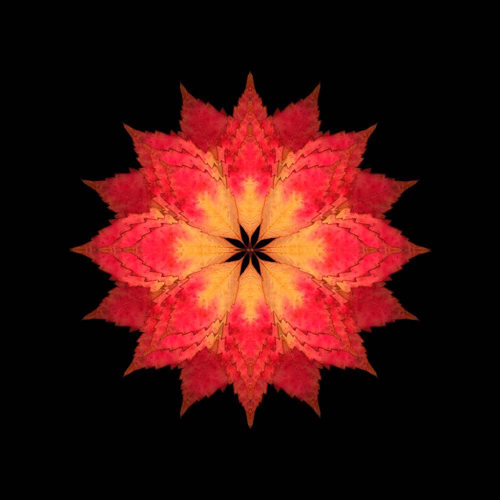 The Fallen 10 (Photograph, Print, Autumn Leaves, Black, Orange, Red)