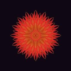 The Fallen 5 (Photograph, Print, Autumn Leaves, Black, Orange, Red)