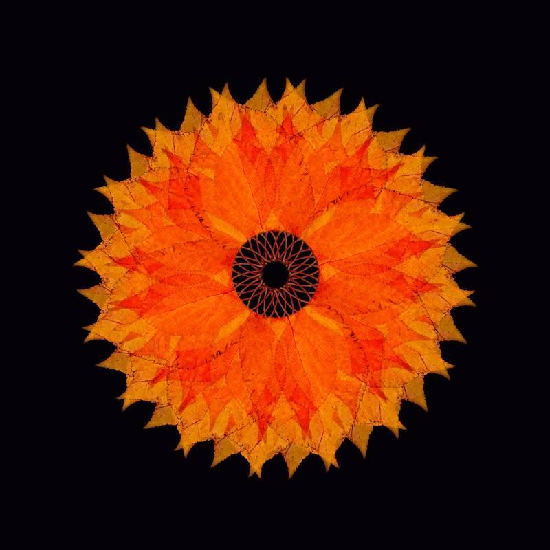 The Fallen 6 (Photograph, Print, Autumn Leaves, Black, Orange, Red)