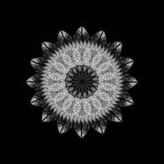Meditation on a Spring Garden 2 (Photograph, Geometric, Symmetry, Gray)