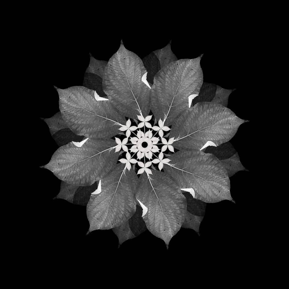 Meditation on a Spring Garden 3 (Photograph, Geometric, Symmetry, Gray)