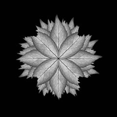 Meditation on a Spring Garden 5 (Photograph, Geometric, Symmetry, Gray)