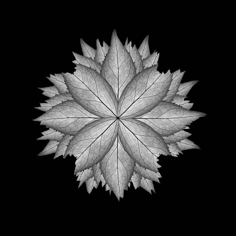 Judith Lyons Color Photograph - Meditation on a Spring Garden 5 (Photograph, Geometric, Symmetry, Gray)