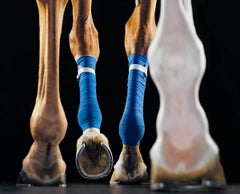Treadmill - Horses, Contemporary Photography, Racing horse, British photography