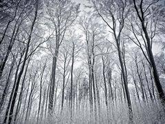 Berg Park I (Photograph, Print, Nature, Forest, Winter, Trees, Snow, White)
