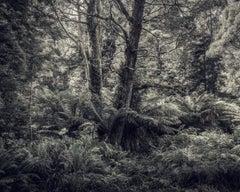 Fern Forest I
