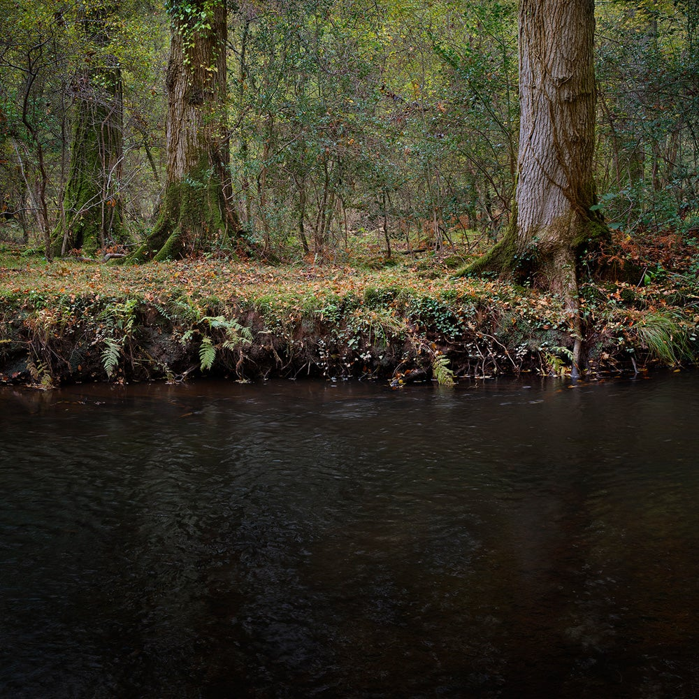 Half Light 8 - Ellie Davies, Contemporary, British, Photography, Forests
