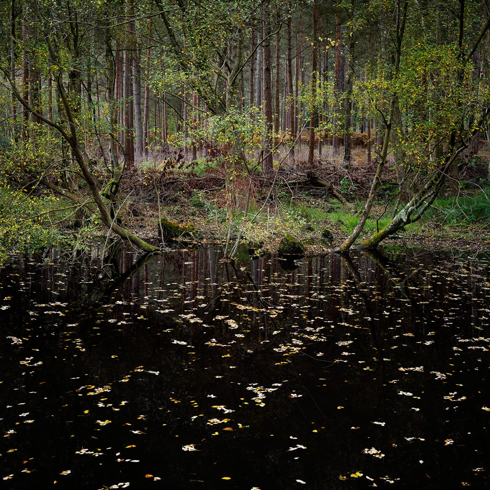 Half Light 10 - Ellie Davies, Contemporary, British, Photography, Forests