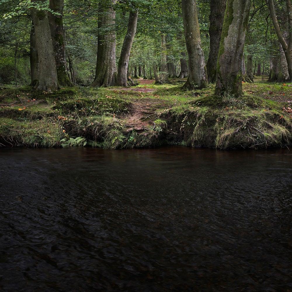 Half Light 11 - Ellie Davies, Photography, British, Woodland, Peace, Freedom