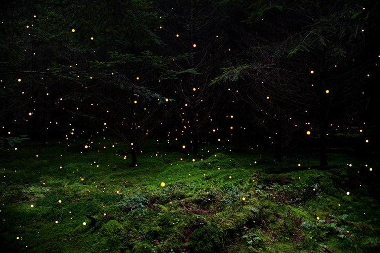 Ellie Davies Color Photograph - Stars 5