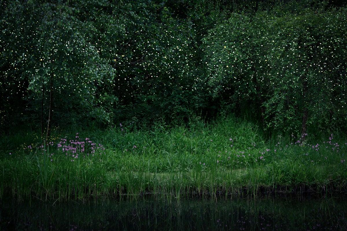 Stars 6 - Ellie Davies, Contemporary print, Forest imagery, Woodland, Night sky