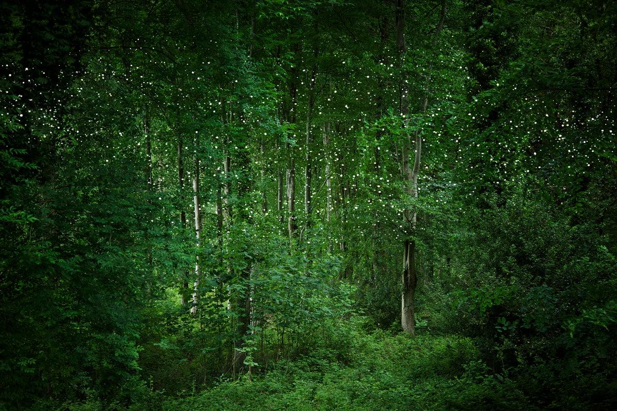 Stars 7 - Ellie Davies, Contemporary Photography, Night sky, Woodland imagery