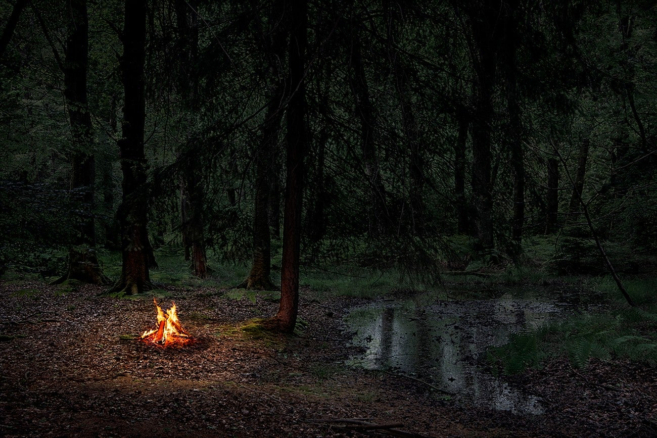 Fires 2 - Ellie Davies, Contemporary print, Forest imagery, Woodland, Photograph