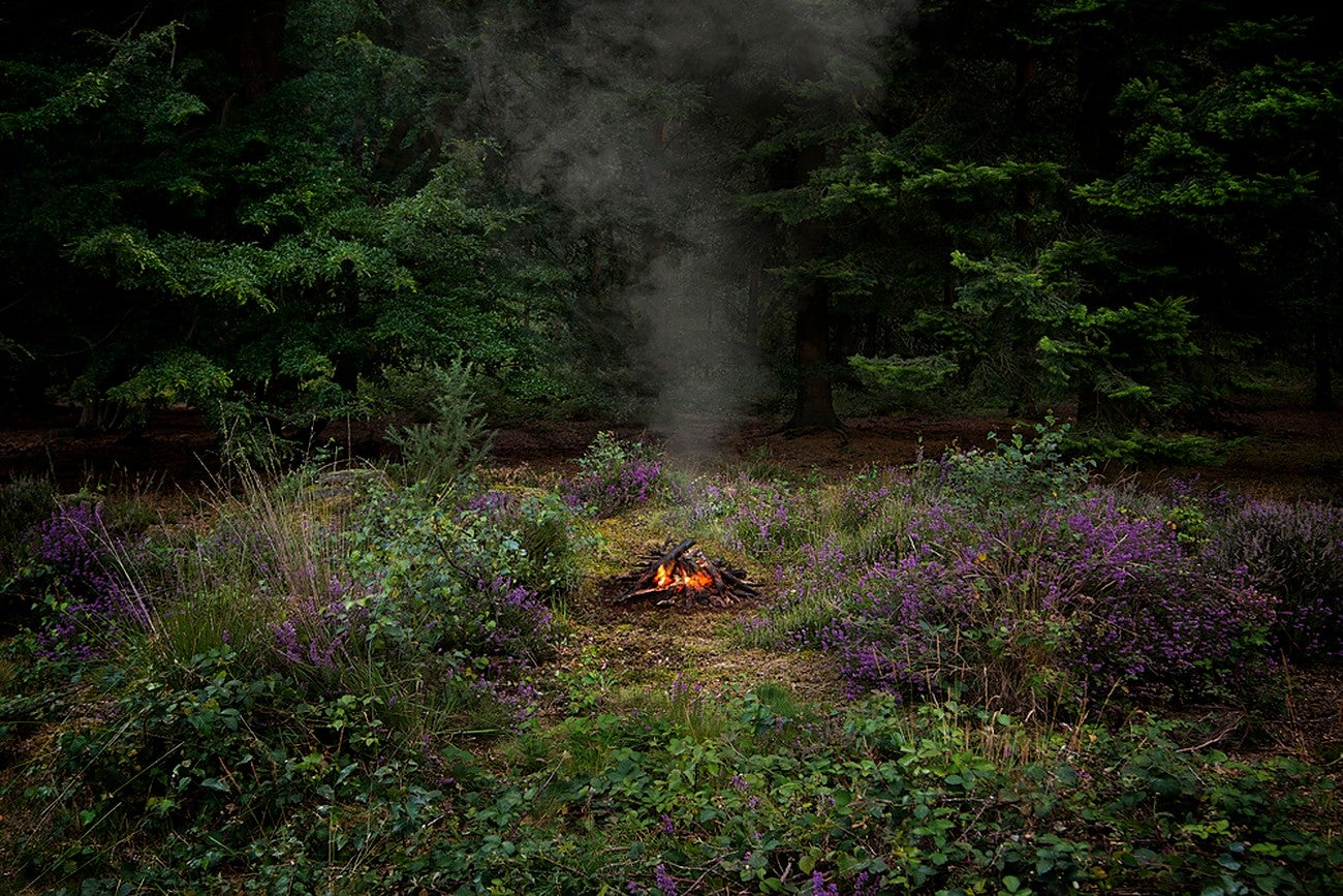 Fires 3 - Ellie Davies, Contemporary print, Forest imagery, Woodland, Photograph