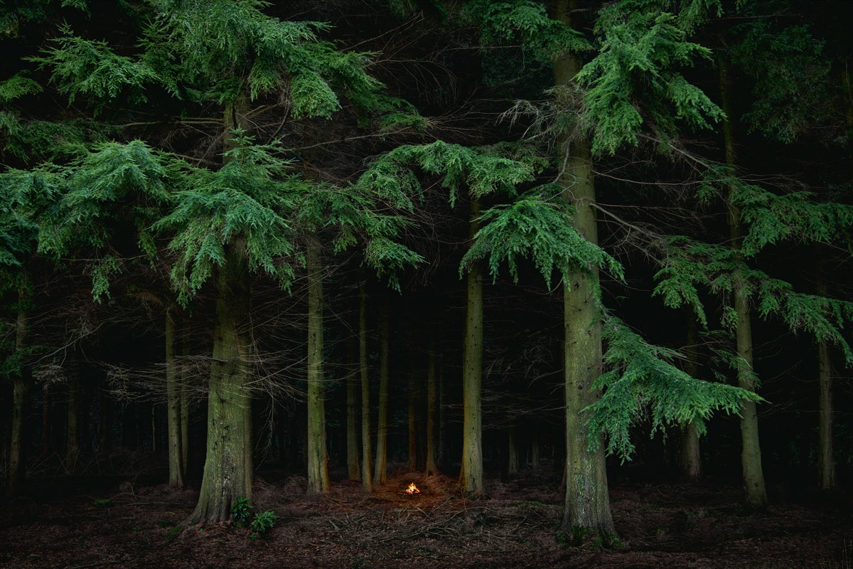 Fires 7 - Ellie Davies, Forest, Woodland, Nature, Plants, Humanity, Presence