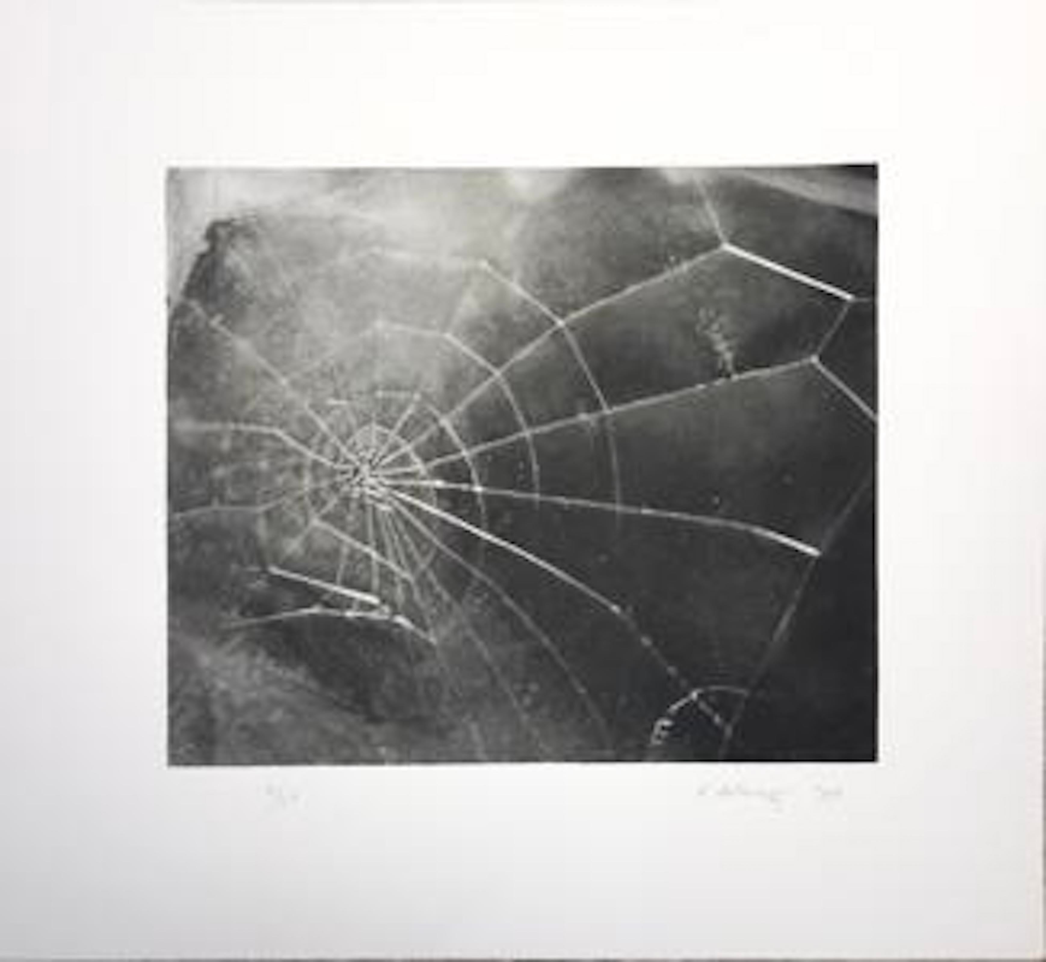 Spider Web; 2009; Screenprint; 17 1/2 x 19 inches; Edition of 117