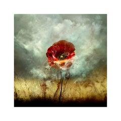 """War Poppy 1,"" 2015 Contemporary Photograph"