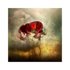 "Giles Revell - ""War Poppy 3,"" 2015 Contemporary Photograph by Giles Revell"