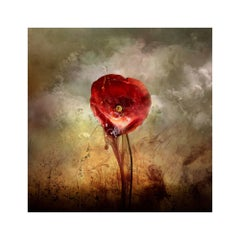 "Giles Revell - ""War Poppy 4,"" 2015 Contemporary Photograph by Giles Revell"