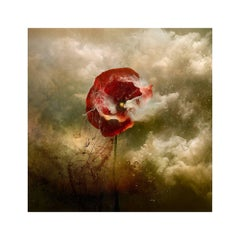 """""""War Poppy 5,"""" 2015 Contemporary Photograph by Giles Revell"""