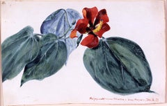 19th Century Botanical Study Watercolor, Hibiscus, 1859