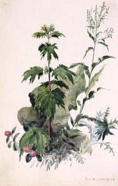 19th Century Watercolor Botanical Study, Plants, Bristol, Rhode Island, 1863