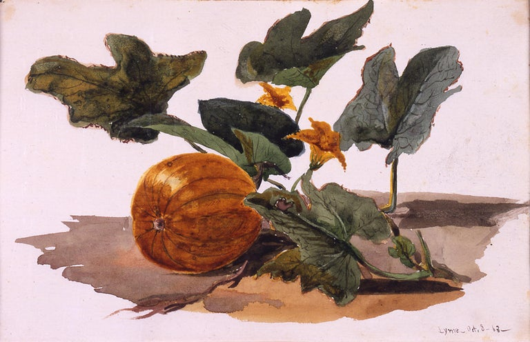 19th century watercolor, Pumpkin, Lyme, Connecticut, 1866
