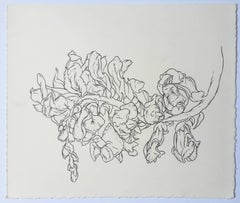 Studio, plant drawing #1, work on paper, graphite, signed