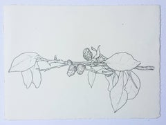 Bermuda, Plant drawing #2, work on paper, graphite, signed