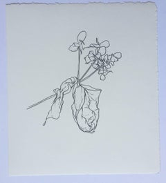 San Francisco, plant drawing #1, work on paper, graphite, signed
