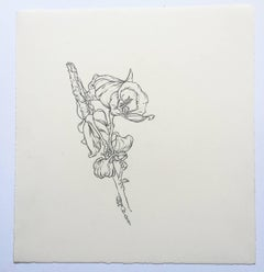 Untitled, plant drawing #3, work on paper, graphite, signed