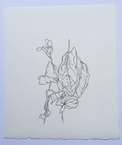 Karl Klingbiel, Plant Drawing #5, work on paper, San Francisco, 2015