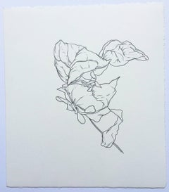 SF, plant drawing #6, graphite, work on paper, signed