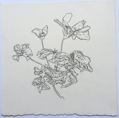 CT, plant drawing #7, work on paper, graphite, signed